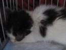 Котята с Почтамтской