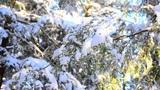 Eugen Doga - Prima zapada (First snow)