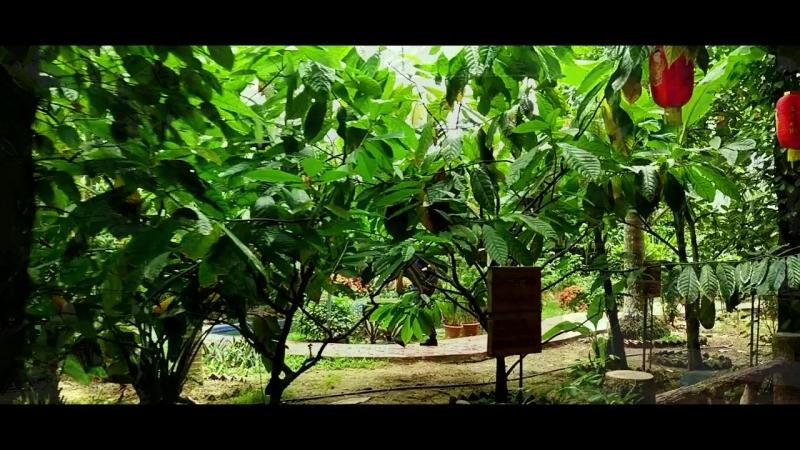 Xinglong - Музей кофе/ Китай, Хайнань