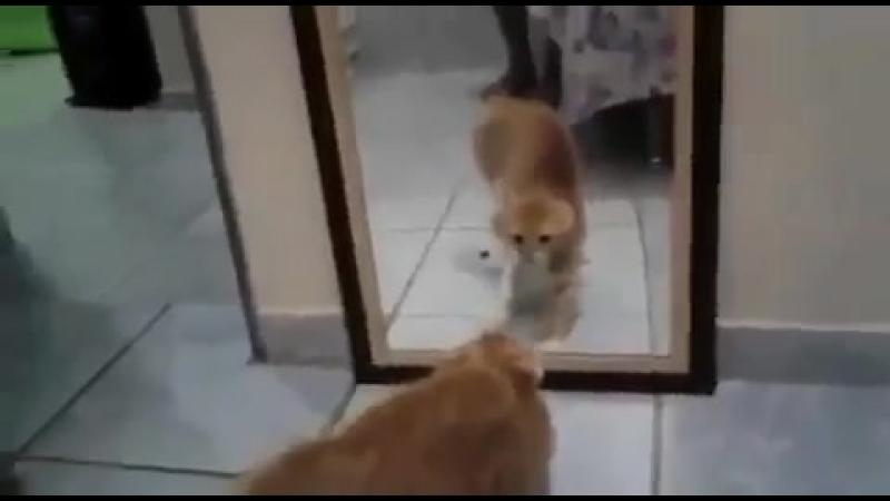 Испуганный котик