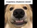 Поделись улыбкою своей ))