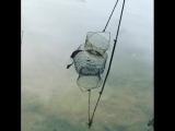 Ужик пытался пролезть в садок с рыбой, Выборг.