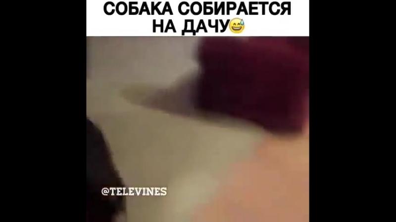 Vayners_prikolBjt6PT6F7U4.mp4