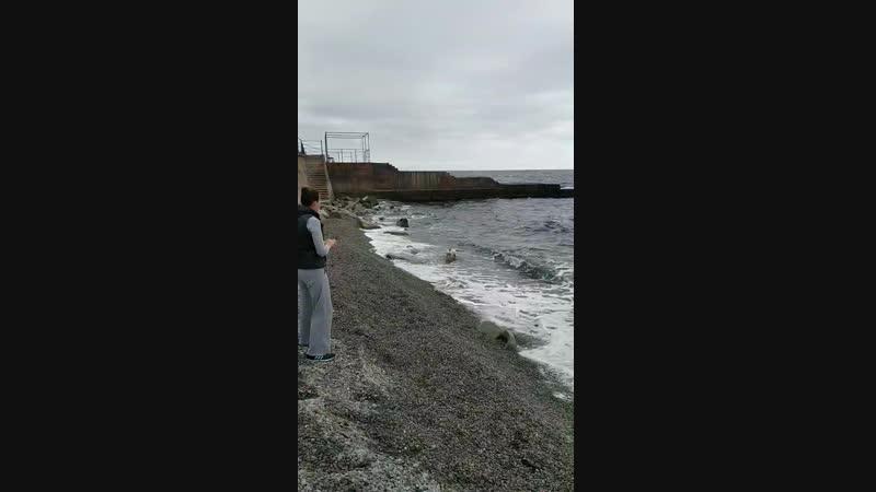 Морской волк Боб