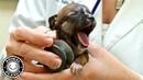 Baby Dogs 🔴 Cute and Funny Dog Videos Compilation (2019) Perritos Adorables Video Recopilacion