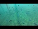 Утопия. Рыбки