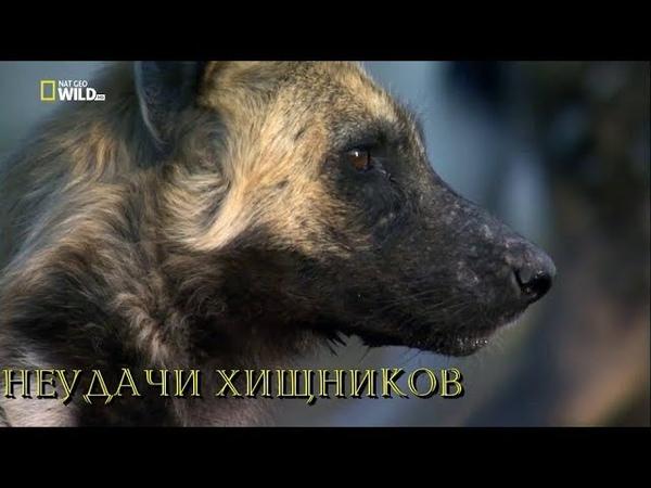Nat Geo Wild: Неудачи хищников (1080р)