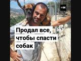 Продал все, чтобы спасать бродячих собак
