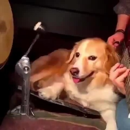 Seven Nation Army - Dog's cover