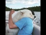Животные знают толк в обнимашках (хорошее настроение, юмор, забавное видео, в мире животных, лев, тюлень, рыбка, щенок, любовь).