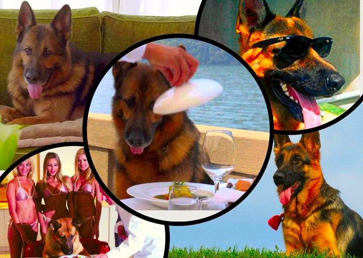 Самые богатые собаки в мире