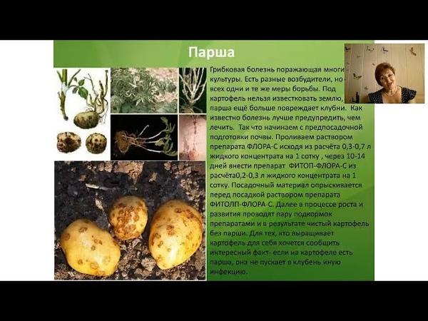 Выращиваем картофель правильно. Повышаем урожай ягодных культур. Цветник. Особенности пересадки