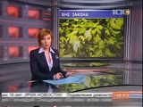 Пол Маккартни против запрета петрушки в России