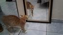 Gato assustado ao se ver no espelho tem reação surpreendente