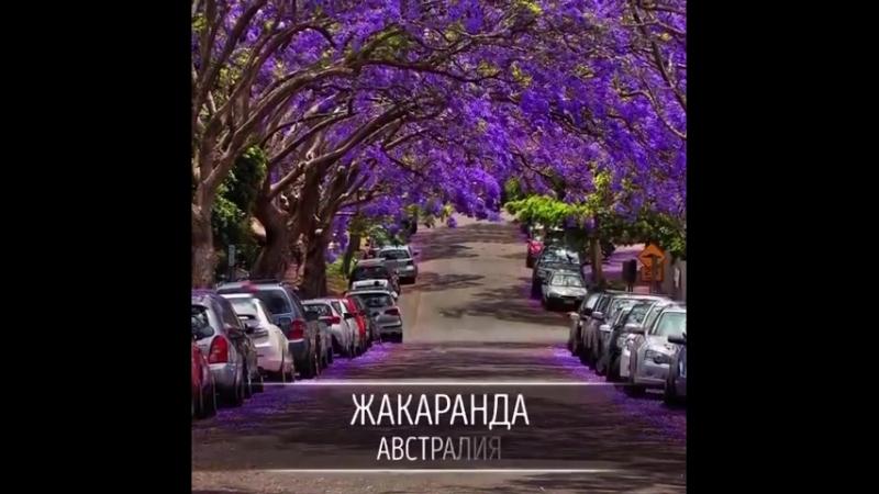 самые классные деревья мира