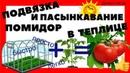 СУПЕР БЫСТРАЯ ПОДВЯЗКА ПОМИДОР В ТЕПЛИЦЕ Канал Домострой ру