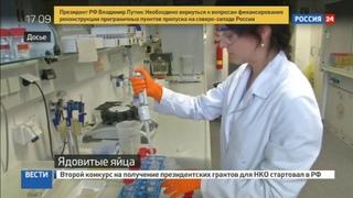 Новости на Россия 24 • 28 миллионов ядовитых яиц: в Германии уточнили масштабы бедствия