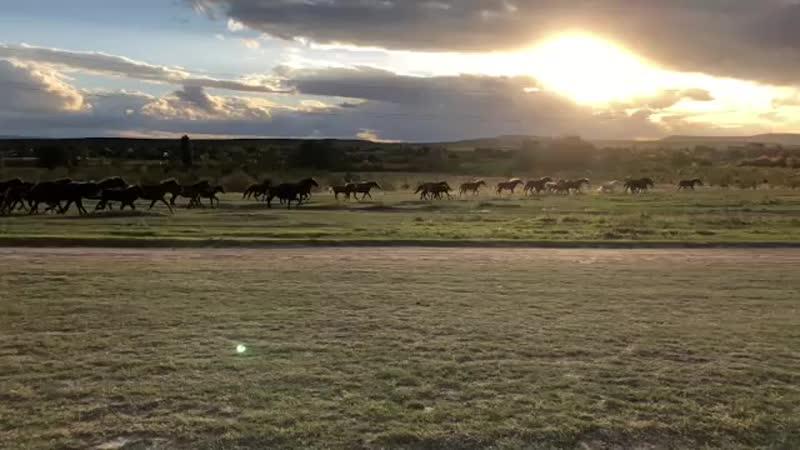 Табун лошадей - это впечатляет!