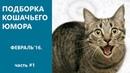 Смешные коты и кошки за март 2016 Видео приколы про котов и кошек.