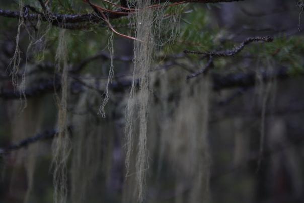Какой-то мох растет, зато живописно.