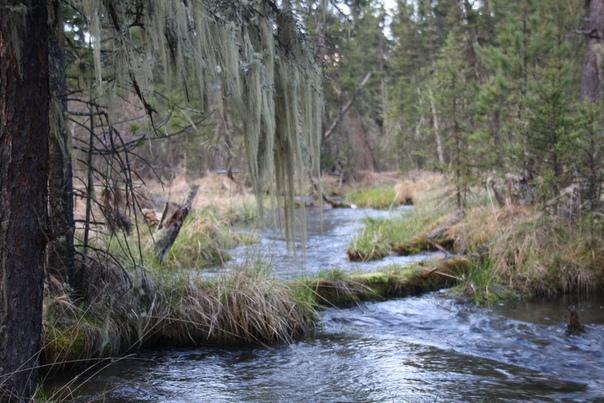 Красиво спадает мох над рекой. Как у плакучих деревьев.