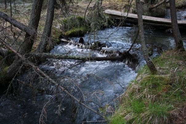 В горных рек Алтая одна особенность: рядом с ними растут деревья потому, что больше нигде нет достаточного питания. Примета такая: если где-то растут деревья, там река.