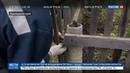 Новости на Россия 24 Поселки Приморья превратились в зону бедствия