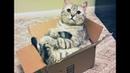 Смешные котики. Кот и коробка =