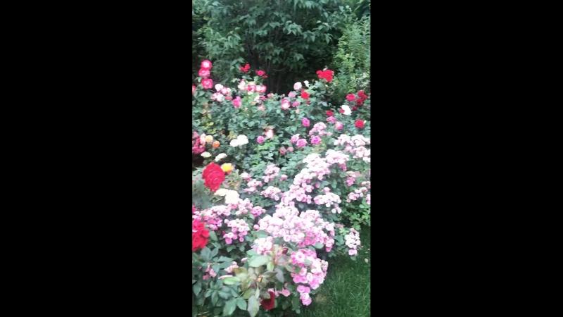 Миллион алых роз 🙈
