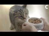 Молодость кошки на долгие годы. Правильное питание - один из элементов формулы молодости Feed.Move.Play.