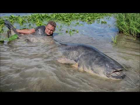 Сом Рекорд сома huge catfish