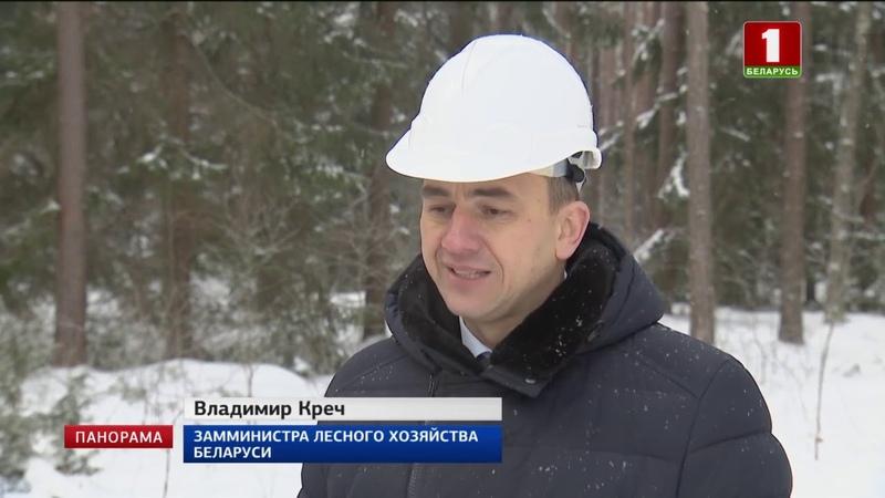Ежегодно в Беларуси заготавливается около 20 млн кубометров древесины Панорама