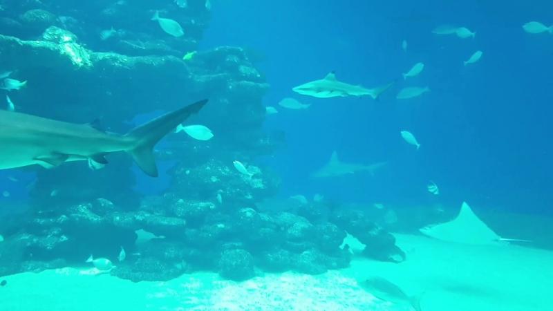 Акулы.mp4