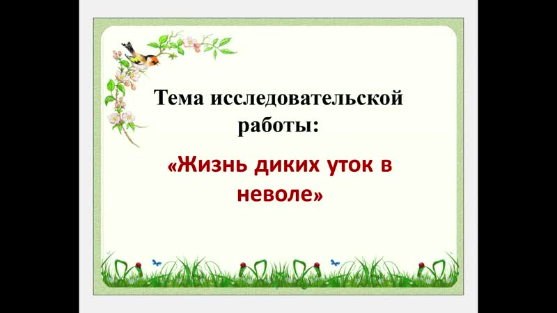 МАН Презентация Дикие утки