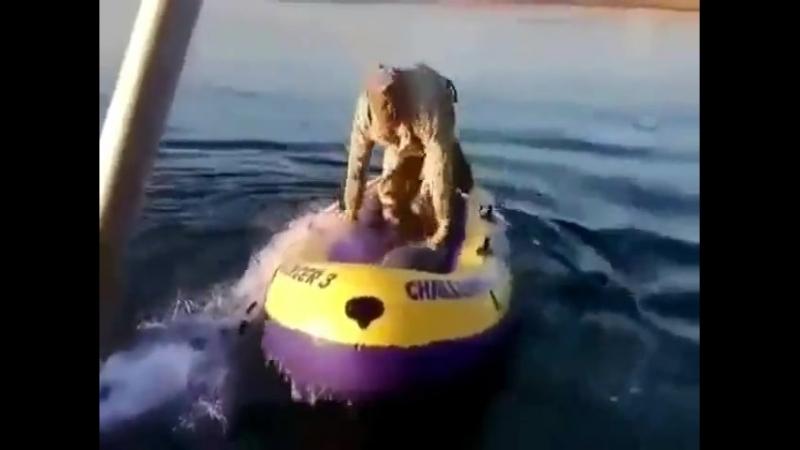 Как надо съёбывать от Рыбнадзора