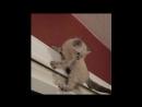 ЛУЧШИЕ ПРИКОЛЫ 2019 с котами Самые смешные видео про кошки и коты Подборка приколов 2019 года