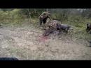 Охота загонная на Лося, коллектив Северные Волки