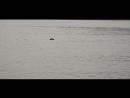 Внезапная нерпа во время рыбалки на Байкале