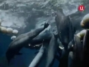 1996 Обещания моря - Подводная одиссея команды Кусто