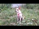 Im-upload-video-1533300821327.mp4