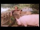 Фильм Укрощение строптивого (1980) - Это ведро виновато