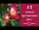 17 самых ароматных роз