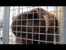 РАЗБОРКИ медведицы Насти и медведя Юры ! Тайган .Крым