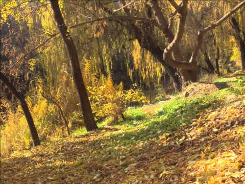 Джек и бобовое дерево.
