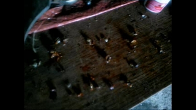 Костя - уничтожитель колорадских жуков