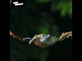 Прыжок лягушки – Планета Земля