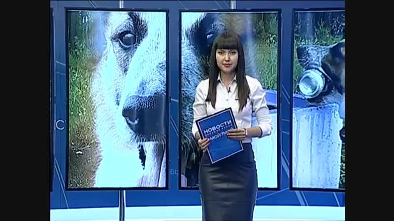 Пёс Пончик из Железногорска умеет убирать за людьми мусор.mp4