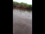 Туториал как ловить рыбу