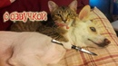 Приколы с котами и смешная озвучка животных – Коты и Магия от PSO
