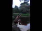 чемпионат деревни по прыжкам в воду с тарзанки 2018 год 1 место